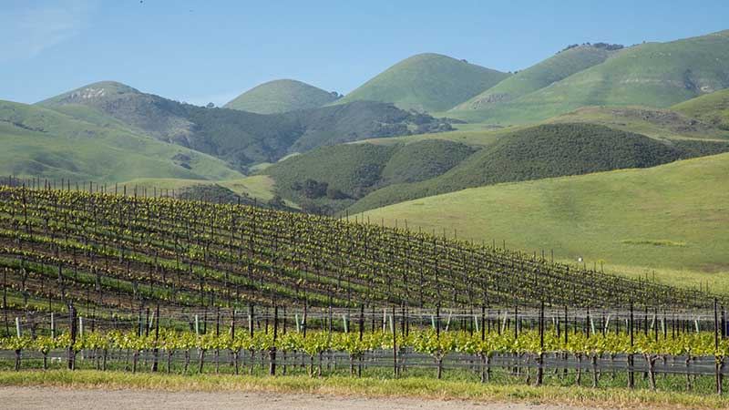 Vineyards in San Luis Obispo